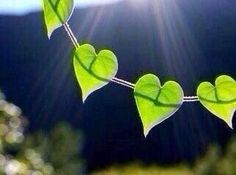 Find the sweetness in your own heart... then you may find the sweetness in every heart. -  Rumi