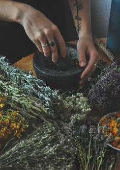 Healing Herbs - Utterly Wicked Witch Ideas for Halloween - Photos
