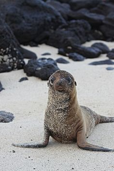 Animals are friends, we should have intimate relationships with the animals clos. Beautiful Dogs, Animals Beautiful, Wildlife Photography, Animal Photography, Baby Sea Lion, Baby Animals, Cute Animals, Wild Animals, Pet Costumes