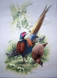 Pheasant, hand embroidered silk painting, Chinese embroidery art, silk thread art, China Suzhou embroidery, Su Embroidery Studio