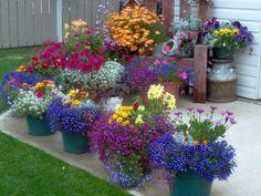 Красивые цветы для дома фото