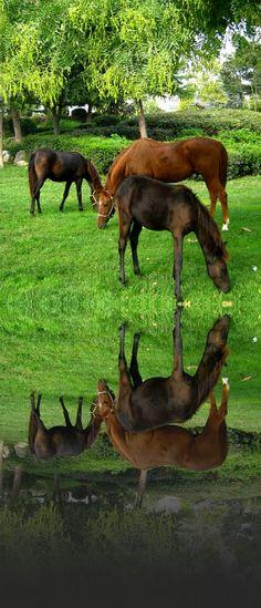 Alcazar Park ~ Larissa, Thessaly region of Greece Parthenon, Acropolis, Mykonos, Santorini, Black Sand, In Ancient Times, Flora And Fauna, Donkeys, Greece Travel