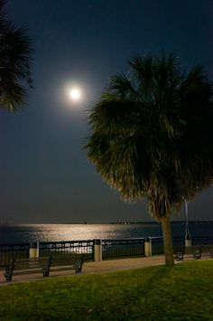 Waterfront Park, Charleston, SC...took this one in May 2012