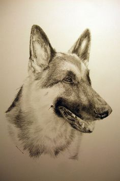 German Sheperd - Lakota - James Colter