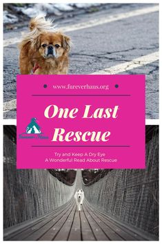One Last Rescue - A compelling story about animals at the Rainbow Bridge.  Author is unknown but a beautiful story of the old, homeless and forgotten when it is their turn at the rainbow bridge.  Try and keep a dry eye.