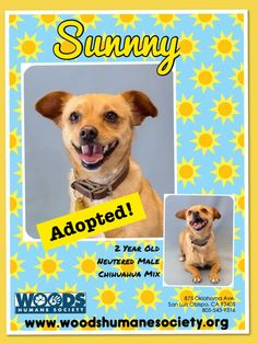 Mother's Day Adoption: Sunny!
