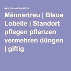 Männertreu | Blaue Lobelie | Standort pflegen pflanzen vermehren düngen | giftig
