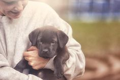 There are many certification programs for animal assisted therapy.