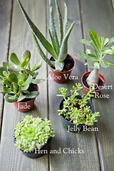 Caring for succulents is easy but if you want them to look best and thrive fast, follow these tips!