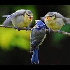 Los pájaros también se enfadan