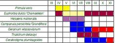 Ako sadiť trvalky | Kvety a Záhrada V tabuľke môžete vidieť obdobie kvitnutia a farbu kvetu – údaje dôležité pri kombinovaní. Takto vidíte úplne prehľadne, čo kedy a ako kvitne a vyberiete si kombináciu.