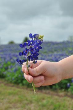bluebonnets in texas | Texas Bluebonnets- Kid World Citizen | Kid World CitizenKid World ...
