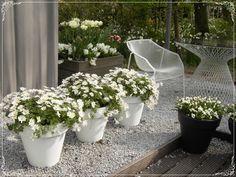 Der weiße Topfgarten - Wohnen und Garten Foto