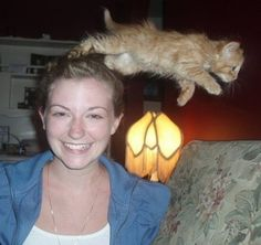 25 cat photo bombs: I am not a cat person but this had me cackling!!!