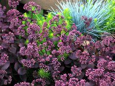 Plante retombante s dum plante grasse exterieur jardiland plantes retom - Manguier resistant au froid ...