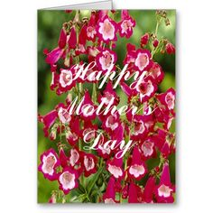Snapdragon Flowers Greeting Card http://www.zazzle.com/snapdragon_flowers_greeting_card-137322546012814459?rf=238271513374472230  #mothersday