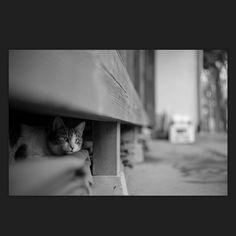 Pipi April 2015 #cat #blackandwhitephotography