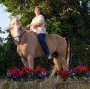 Quater Horse