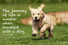 The journey of life is sweeter when traveled with a dog, - Author Unknown
