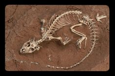 Some of my Paleontology work from the American Museum of Natural History in NYC.