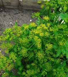 5 Surprising Long-Term Veggies - Gardening Jones