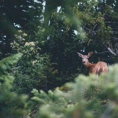 Just watch out for Edward Cullen little deer!