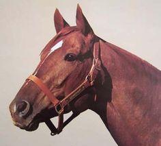 SECRETARIAT-BEAUTIFUL-1974-20X24-INCH-HORSE-RACING-LITHOGRAPH-BY-TONY-LEONARD