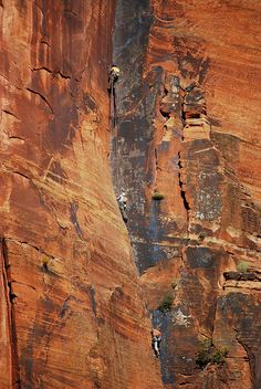 Rock Climbers in Zion
