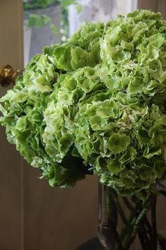 hydrangea Magical emerald classic