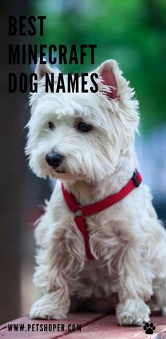 Whether in real life or virtually, you will always want the best for your pet. This involves finding the best name for your Minecraft dog. #BestMinecraftDogNames #MinecraftDogNames Cute Girl Puppy Names, Cute Names, Top Dog Names, Best Dog Names, Cool Female Dog Names, Minecraft Dogs, Wolf Poses, Best Apartment Dogs, Best Dogs For Families