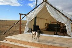 Under Canvas Yellowstone offers upscale accommodations and activities near Yellowstone National Park. Make your next trip truly unique in our luxury tents! West Yellowstone, Yellowstone Camping, Yellowstone National Park, National Parks, Tent Camping, Outdoor Camping, Glamping, Backyard Camping, Camping Ideas