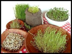 14 dicas sobre germinação de sementes! - Estilo Vegan                                                                                                                                                     Mais