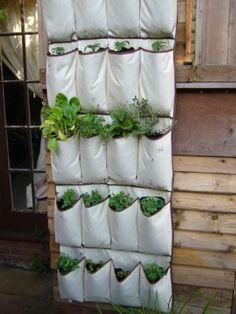 Come trasformare un portaoggetti in un giardino verticale