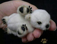 Bear cute baby animals, funny animals, puppies puppies, kittens and Baby Animals Pictures, Cute Animal Pictures, Cute Baby Animals, Animals And Pets, Funny Animals, Adorable Pictures, Bear Pictures, Bear Images, Exotic Animals