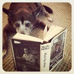 Até ele tá lendo. E você?