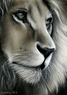 #Leão - #Lion - Ilustração