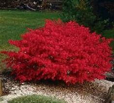 Shrubs For Landscaping, Garden Shrubs, Wisconsin Landscaping Ideas, Front House Landscaping, Inexpensive Landscaping, Mailbox Landscaping, Sun Garden, Indoor Garden, Gardens