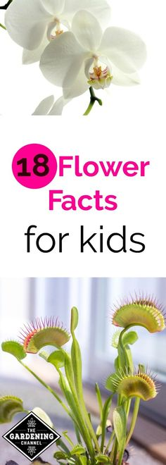 Unusual flower facts for kids.  Gardening is your own science classroom.  As school starts up see if your kids know these flower facts.