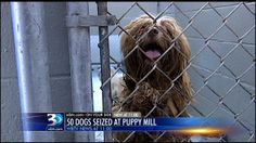 50+ dogs found in possible puppy mill bust in NC