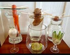 Image result for how to grow carrots in just water