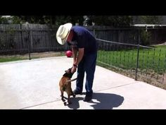 Puppy Training -  Diary Episode #17 - An Exercise To Build Fast Response To Commands