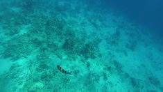 Flora Marina, Underwater Background, Red Sea, Shipwreck, Marine Life, Scuba Diving, Egypt, Ocean, Ss