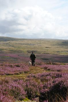 the moors England