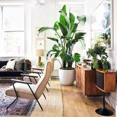 Mid Century & Greens = Perfection
