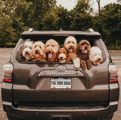 10 Fun Summertime Activities & Vacation Ideas For You And Your Dog - Funny Animals Cute Dogs And Puppies, I Love Dogs, Doggies, Dalmatian Puppies, Shitzu Puppies, Funny Puppies, Adorable Puppies, Baby Dogs, Cute Little Animals
