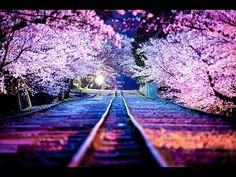Cherry Blossom Japan, Cherry Blossoms, Blossom Trees, Japanese Blossom, Blossom Flower, Japanese Flowers, Beautiful Places, Beautiful Pictures, Beautiful Dream