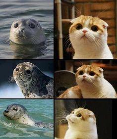 look alikes -  LOL