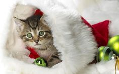 Christmas, Cat, Hd Cat Wallpapers, Kittens, Puffy Cats, Widescreen Pussycats…