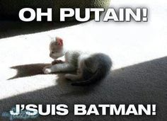 This Batman kitty is adorable. Funny Shit, Haha Funny, Funny Cute, Hilarious Stuff, Crazy Cat Lady, Crazy Cats, Amor Emo, Meme Chat, Funny Animals