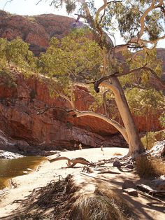 Larapinta Trail - Ormiston Gorge, Northern Territory, Australia Western Australia, Australia Travel, South Australia, Tasmania, Places To Travel, Places To Visit, Land Of Oz, Travel Inspiration, Beautiful Places